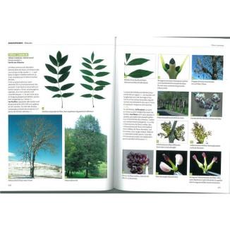 dictionnaire-visuel-des-arbres-et-arbustes-communs_2